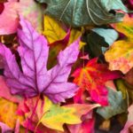 Autumn Soul: a day of connection, creativity and healing practices