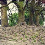 The Power of Grounding
